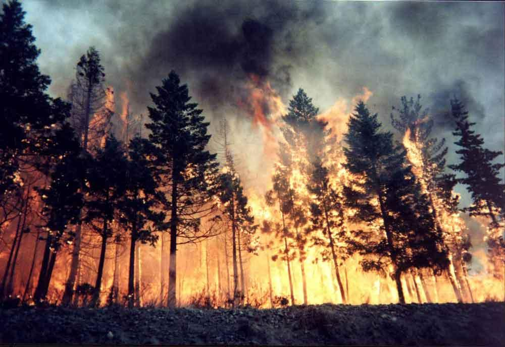 This forest burning represents the many lives and pensions that have been destroyed by pension scammers